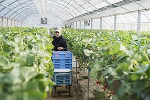 四川分层分级培养农业职业经理人 享有产业、社保、金融等扶持