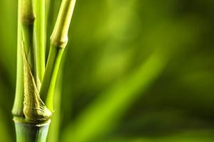 2018世界竹藤大会下周在京举行 宜宾眉山将推介竹产业