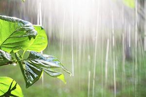 """为何今年的雨这么""""凶""""?成都市水务局等三部门权威解读"""