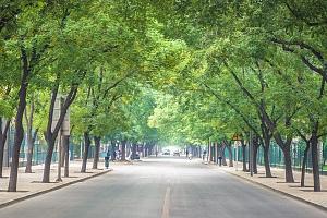 截至目前 成都市已建成绿道1585公里