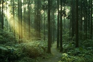 成都首次公布林业生态家底 近五年新增森林面积相当于70个兴隆湖